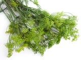blooming dill for cucumber preserve pickling poster