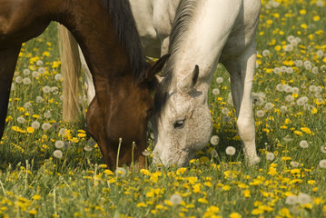 Grazing together