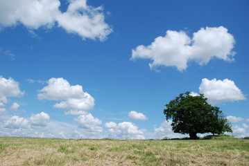 Tree in field with cloudy sky