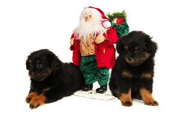 Puppy Dogs with Christmas Santa