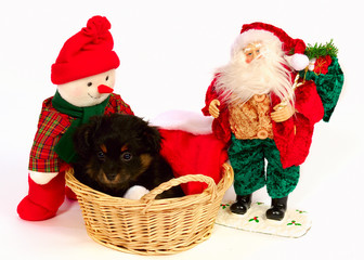 Puppy Christmas Theme with Santa
