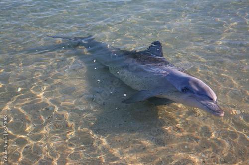 Tuinposter Dolfijn Delfine Australien_07_1480