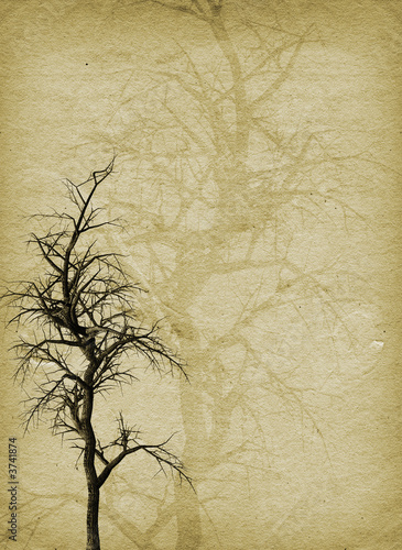 Old gnarly tree on grunge style background © Kirsty Pargeter
