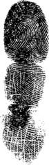 Full Fingerprint