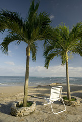 chair by the beach with two palm trees on the sea