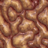 a large rendered illustration of close up brains poster