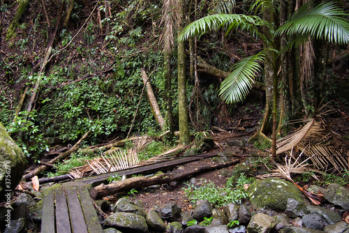 the beautiful nature of border ranges rain forest