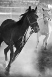 horses running loose at rodeo, converted with added grain poster