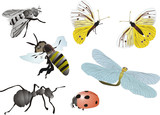 illustration with insects poster