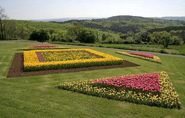 yellow and pink tulips in garden