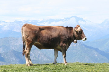 Alpine Cow, With Bell.