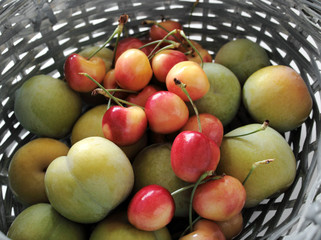 green plums and rainier cherries