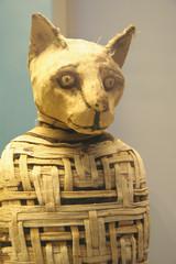 Mummified cat mummy from Egypt
