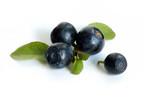 bilberries macro