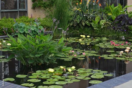 Leinwanddruck Bild Aquatic Garden