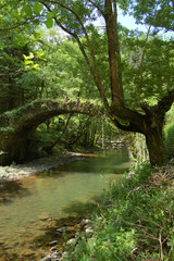 Aged Bridge and Tree with Vegatation. Leitzaran Valley. Spain