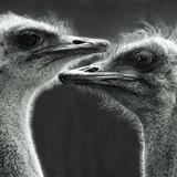Fototapeta ptak - dwa - Ptak