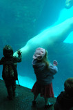 Kids touching seals at  aquarium. poster