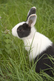 rabbit in the grass.
