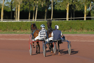 deux trotteurs avant la course