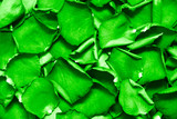 Rich green leaves. Texture or background. poster