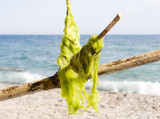 Sea seaweed on a bamboo stick on a background of a beach poster