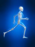 anatomie eines laufenden skeletts poster