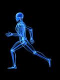 laufende skelett anatomie poster