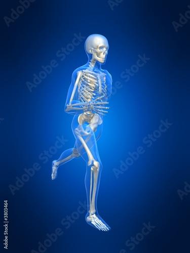 poster of anatomie eines laufenden skeletts