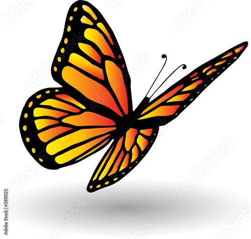 Hand drawn butterfly illustration