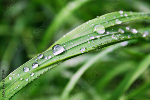 Morning summer dew