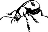 bloody nosed beetle poster