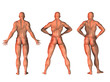 three 3d fitness figures  in different poses