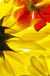 Yellow and red summer flowers background