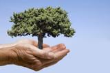 Hände mit Baum