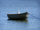boat with bird - 3821247