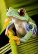 roleta: frog the princess