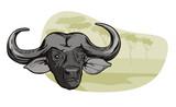 African buffalo in safari poster