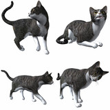 Katze-Grey Tabby poster