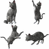 Katze-Silver Tabby poster