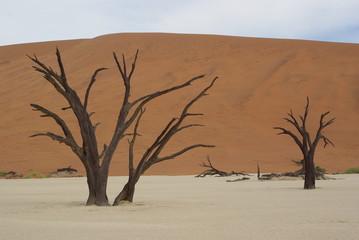 Arbre mort - Namibie - Deadvlei
