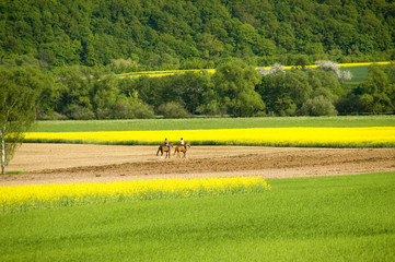 Two horsewomen
