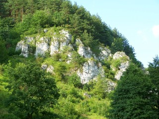 wooded rock