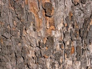 Tree bark, London UK