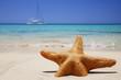 Quadro Estrella de Mar en la Playa