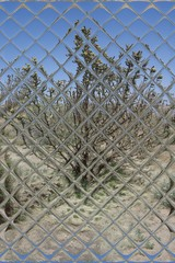 Cholla Cactus through Glass