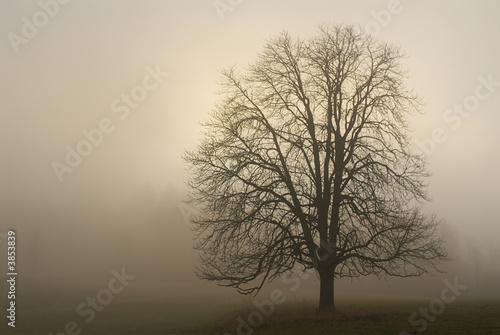 Fototapeten,baum,nebel,morgens,landschaft