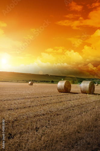 canvas print picture Yellow grain harvested on a farm field