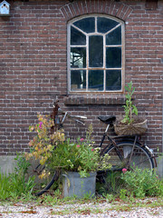 Old bicycle and plants