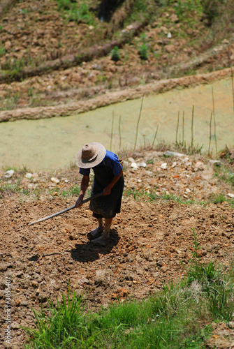 Chinese worker in a rice terrace